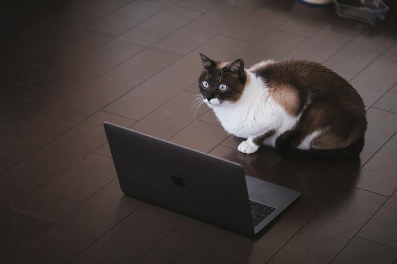 cat126IMGL6424_TP_V4
